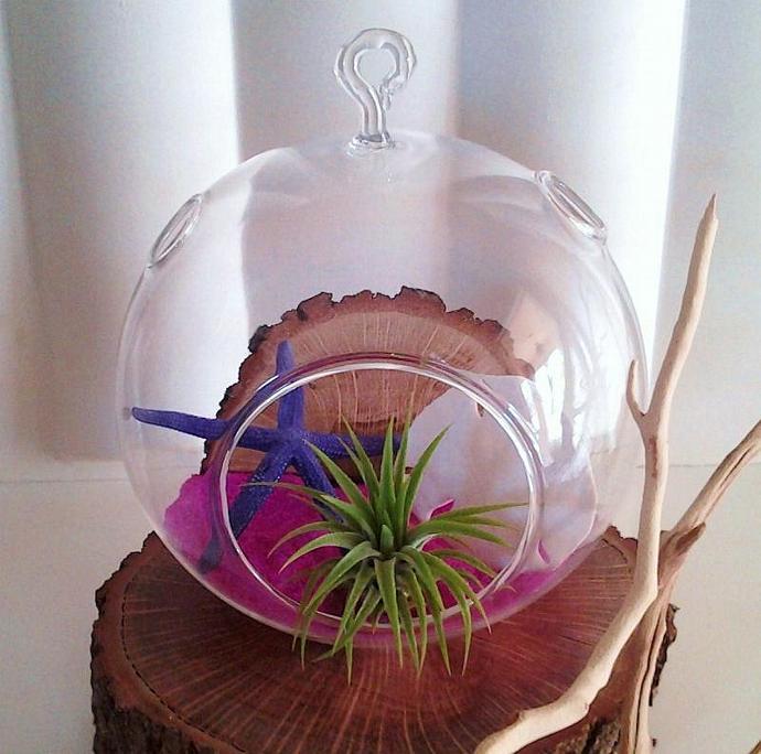 (FUSCIA) -  Round Glass Globe Terrarium with Air Plant, Purple starfish, oak
