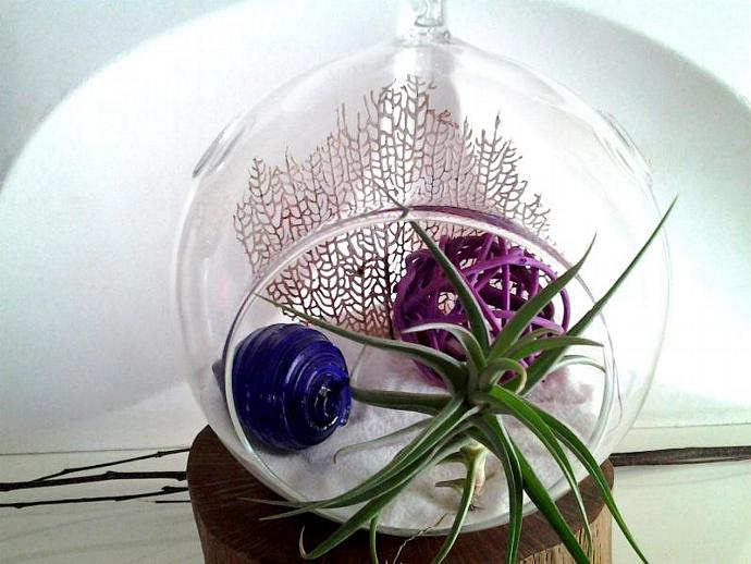 PURPLE RAIN - A beautiful terrarium with an Inka gold air plant, Real sea fan,