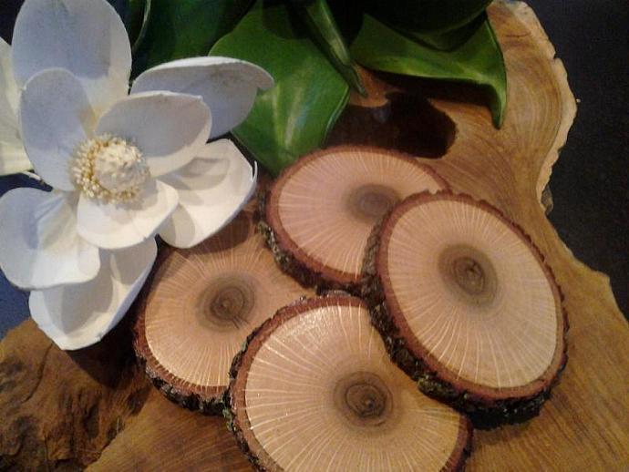 (Set of 4)  Natural Oak Tree Trunk Coasters - tree slices- kitchen - housewares