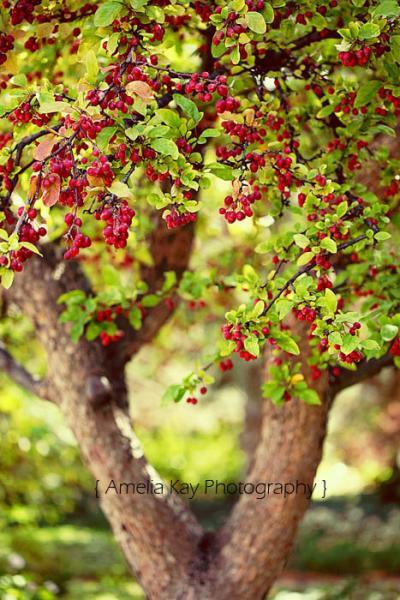 Landscape Photograph - Tree red berries fall autumn tree trunk brown bright lime