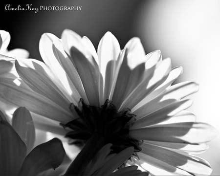 Photograph - Sitting By The Window - Fine Art Black and White Flower Print -