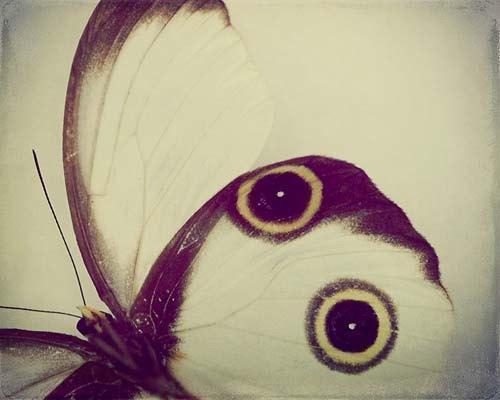 Butterfly Bug Photograph - fine art neutral Cream Brown Yellow Black Circles