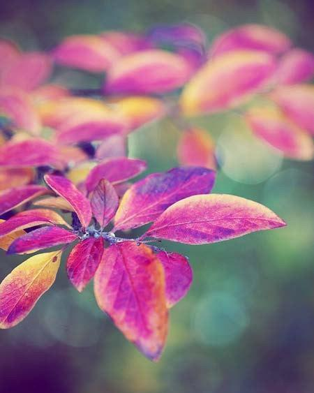Photograph - Rainbow Leaves - Fine Art Nature Print colorful fall autumn
