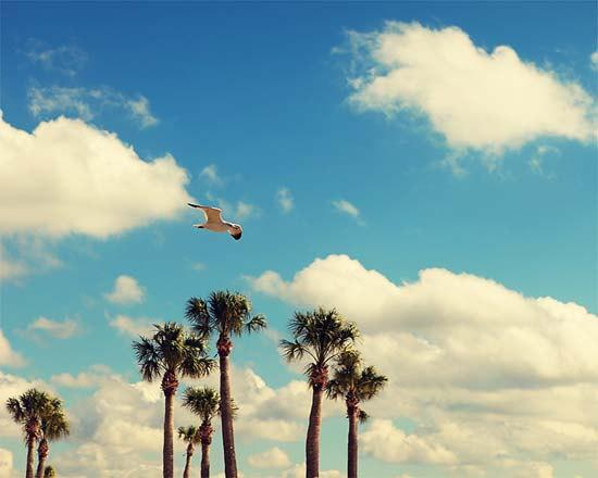 Landscape Nature Photograph - In The Blue Sky - bird Seagull white blue ocean