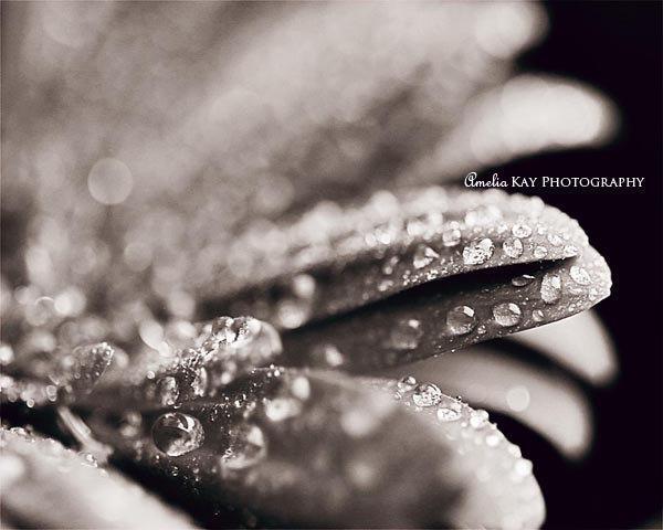 Flower Photography - 8X10 nature still life warm autumn gerbera daisy water