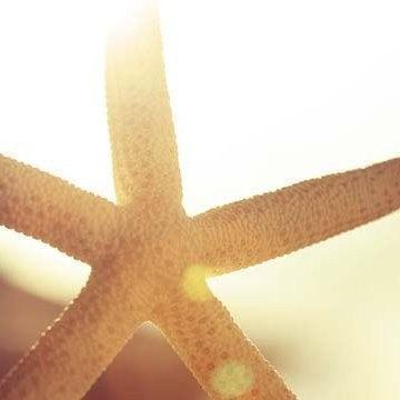 In The Light - Fine Art Starfish Photograph Print 4x4 - Nautical Beach warm