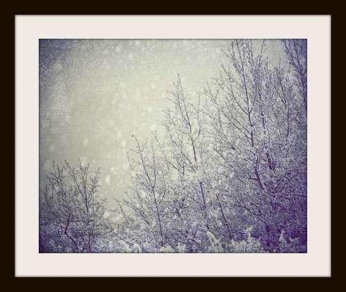 Winter Tree Landscape Photograph - 8x10 dreamy autumn winter wonderland white