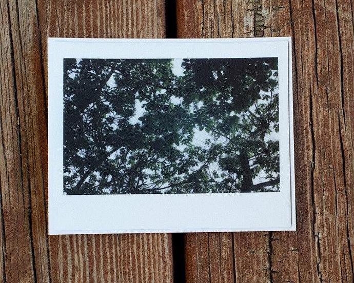 Group of four tree Polaroid postcards