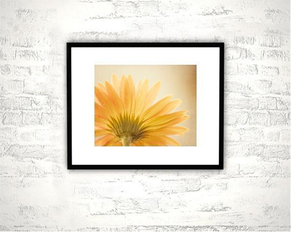 Yellow Flower Photography - 8x10 Daisy Print - Gold Golden Wall Art Photograph