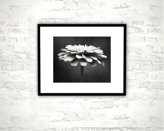 Black and White Flower Photography - 8x10 Print - Nature, Dark Grey, Gray Wall