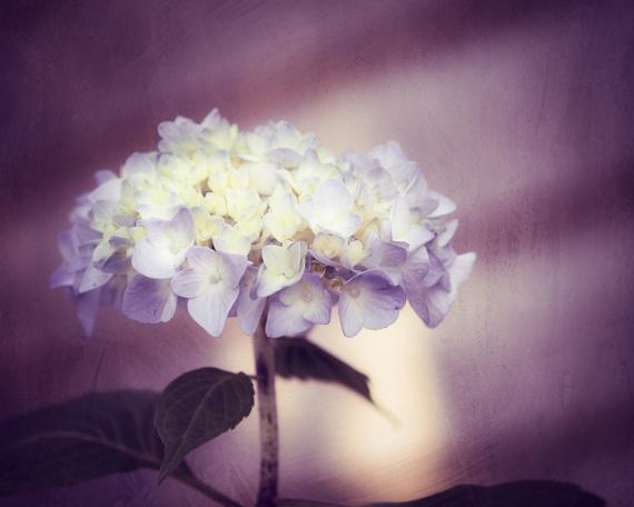 Purple Photography - 8x10 Flower Print - Dark Purple, Nature Wall Art Photograph