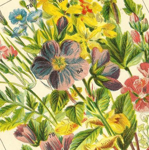 Victorian Garden Bouquet 1891 WJ Gordon Antique Botanical Chromolithograph, Pl 6