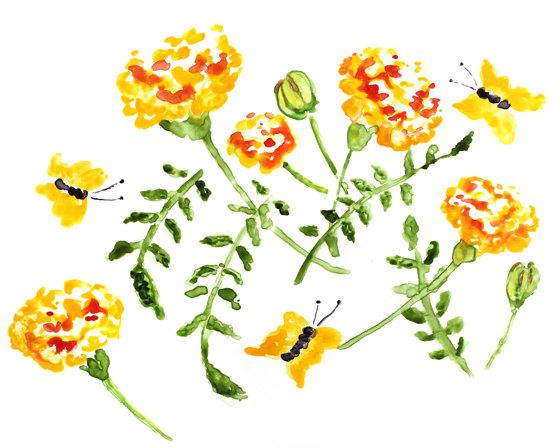 Marigolds watercolor print flower lighthearteddreamer mightylinksfo