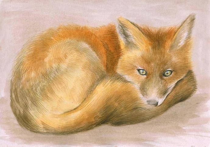 Fox watercolor painting. Red fox. Tod. Original Watercolor Painting. Realistic