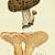 Hedgehog Mushroom and Hawks Wing Mushroom 1884 Victorian M C Cooke Antique