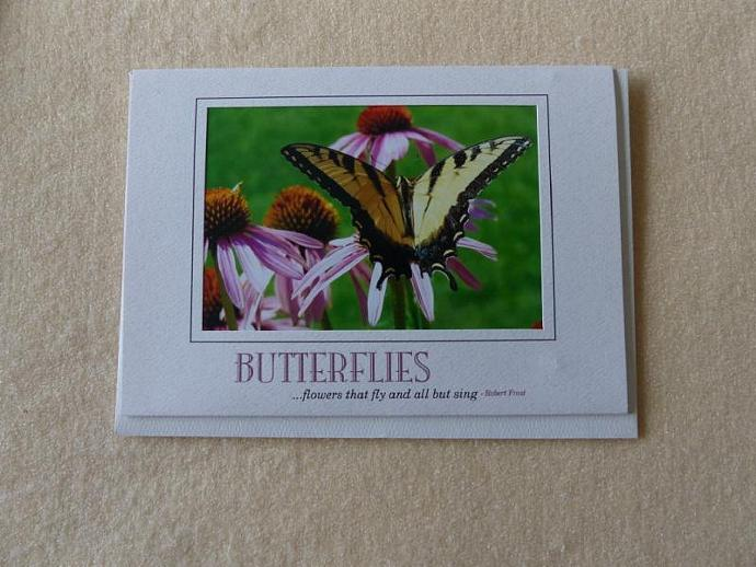 Collection of 3 butterfly cards, greeting cards, butterfly greeting cards,
