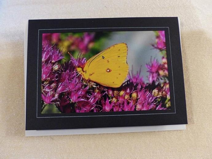 Collection of 3 photo cards, Butterflies, butterfly greeting cards, nature