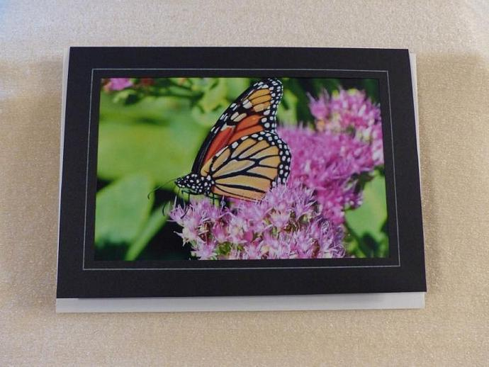 Collection of 4 photo cards, Butterflies, butterfly greeting cards, nature