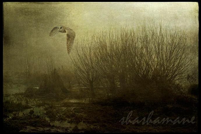 The midnight owl - fantasy scene 5 x 7 fine art photography print