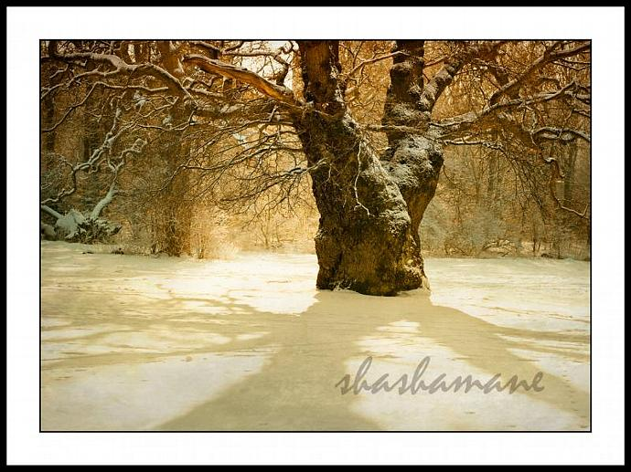 "Gateway to dreams - Magical, snowy, fairytale mood 5 x 7"" print fine art"