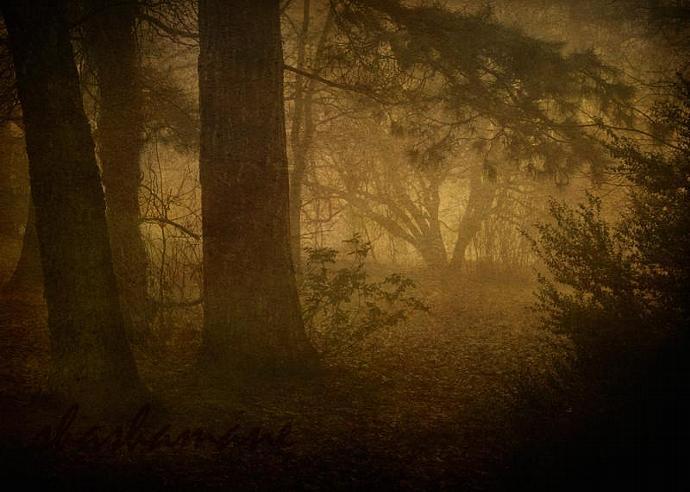 "Treading softly - Magical forest fairytale scene - 5 x 7"" fine art photography"