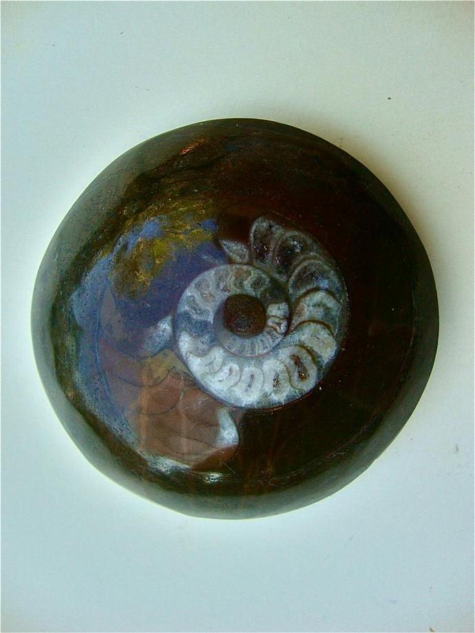 ancient ammonite fossil specimen