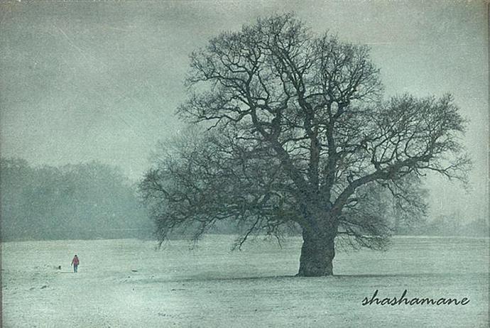 "It snows during the dog walk - Snowy winter scene 5 x 7"" fine art photography"