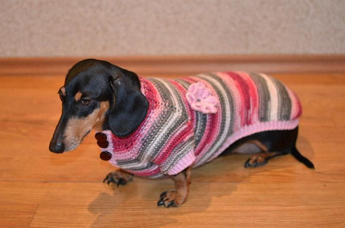 READY TO SHIP Dog Clothes dachshund Sweater  Warm Hand Knitting medium dog