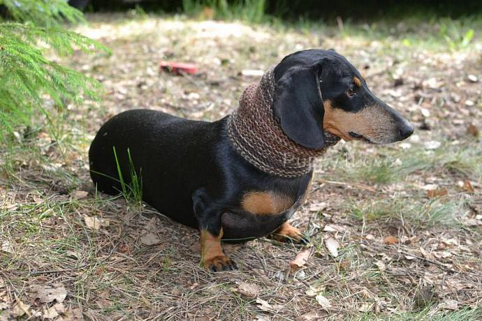 Dog clothes dachshund Scarf for dog Neck Warmer for Small Dog Handmade  Snood