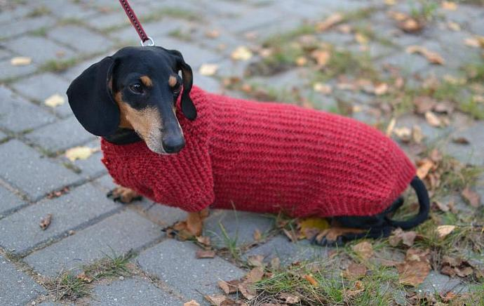 Dog Sweater Pets Clothes Hand Knitting dachshund medium dog vinous rowan warm