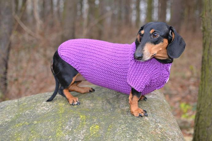 Dog Clothes dachshund  Dog Sweater Hand Knitting  sweater medium dog purple For