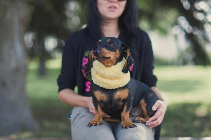 Dog clothes dachshund Snood Yellow Soft  Scarf for dog  Neck Warmer for  Medium