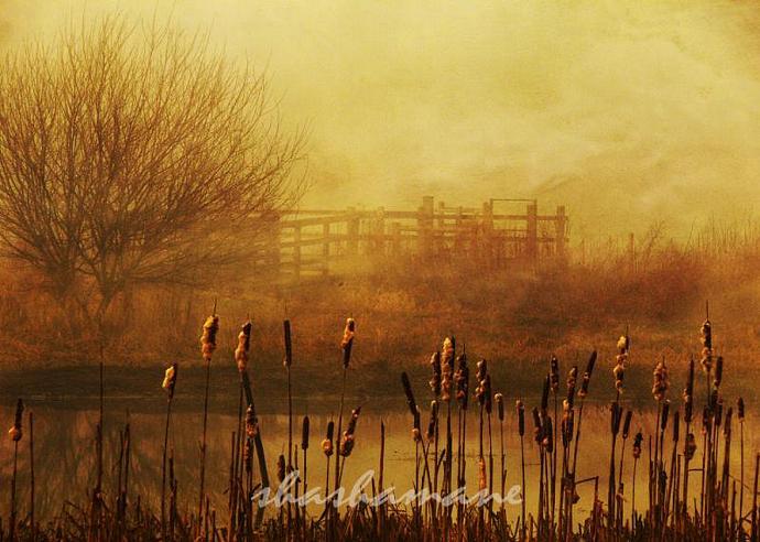 "We tried but we don't belong - Atmospheric winter, golden scene 5 x 7"" fine art"