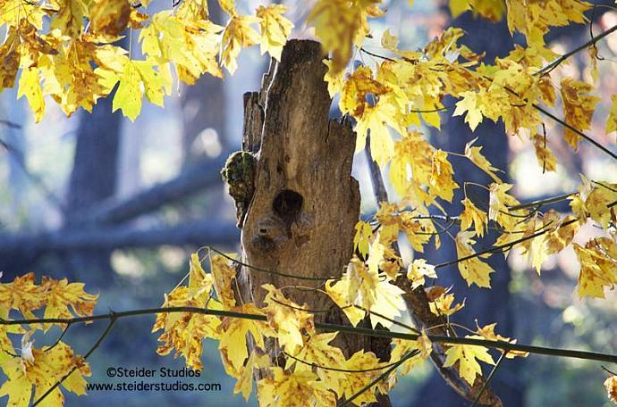 Autumn Color Surrounds Bird Nest Cavity Landscape Photograph All Occasion