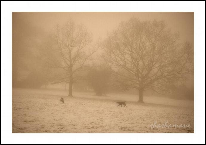 "Chiens et brouillard - Dogs and fog 5 x 7"" fine art photography print"