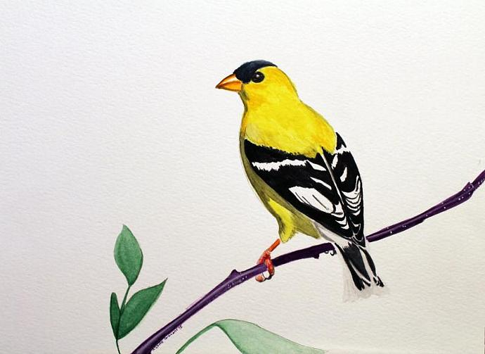 Gold Finch - Original Watercolor by Karine Paiement 9x11.75