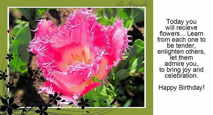 Photo Greeting Card - Flat 5x7- Birthday, Women, Girls, Floral. Tulip