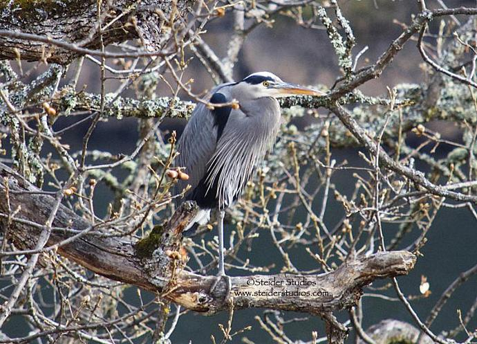 Heron Camouflaged in Tree Nature Photo All Occasion Greeting Card