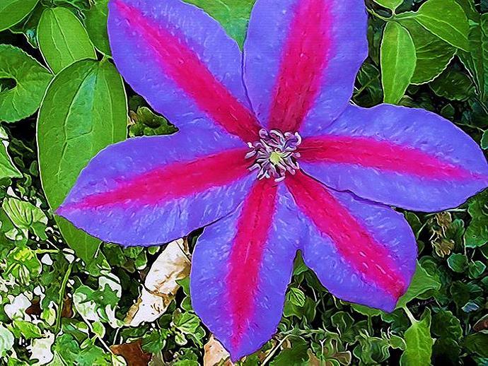Excitement- mixed media botanical