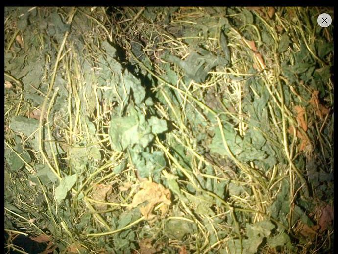 Organic Cerasee Vine _ 5 lbs