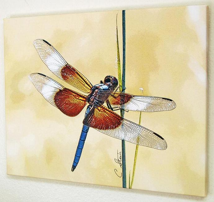 Dragonfly Gallery Wrapped Canvas Photographic Art Print
