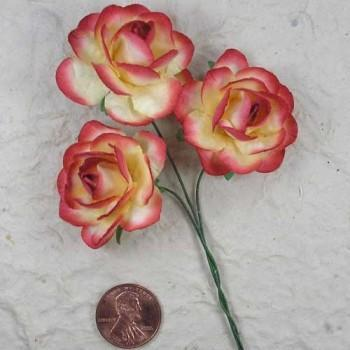 35mm open rose
