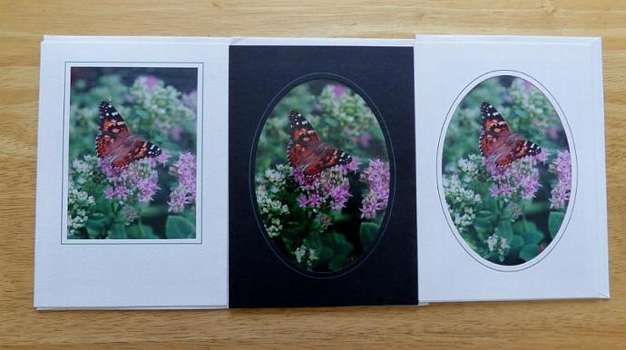 Collection of 3 photo cards, Painted Lady Butterfly greeting cards, butterfly