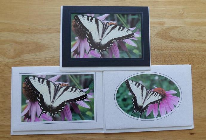 Collection of 3 photo cards, Tiger Swallowtail Butterfly greeting cards,