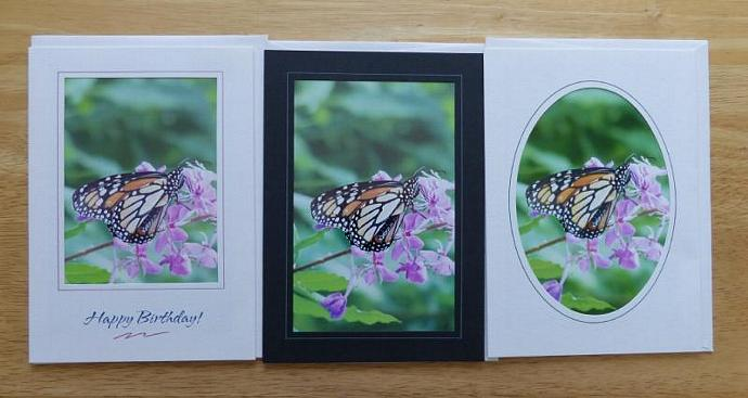 Collection of 3 photo cards, Monarch Butterfly greeting cards, butterfly