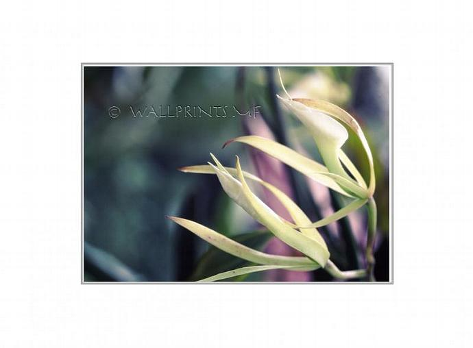 White Orchid Fine Art Photography Print, Spring Home Decor, Luminous Wall Art