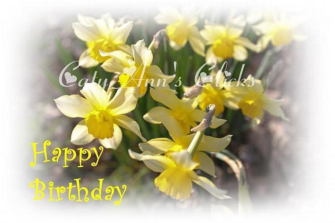 Birthday Daffodils-001 Note Card