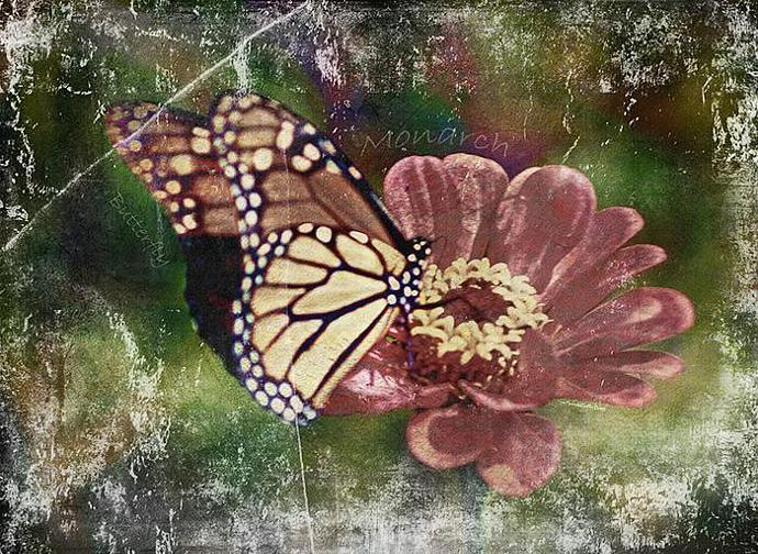 Monarch I- mixed media,collage,photography,butterfly