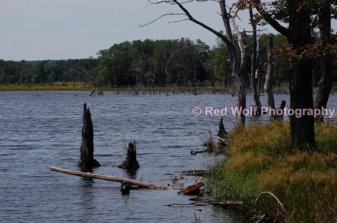 Dead Lake Photo Print