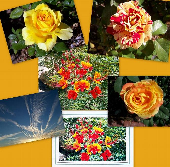 Garden Visions #2